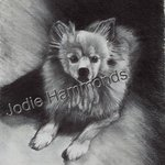 memorial pomeranian By Jodie Hammonds