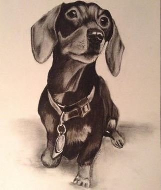 Jodie Hammonds: 'shivers the dachsund', 2017 Graphite Drawing, Portrait. Artist Description: Dachsund, doxie, dog...