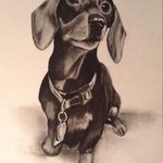 shivers the dachsund By Jodie Hammonds