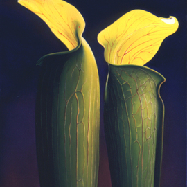 Anni Adkins: 'Two Jacks', 2006 Oil Painting, Floral. Artist Description:  jack in the pulpet, oil painting, flower painting, floral paintings, paintings of jack in the pulpets, Anni Adkins ...