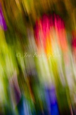 Artist: Jon Glaser - Title: Abstraction of Butterflies - Medium: Color Photograph - Year: 2011