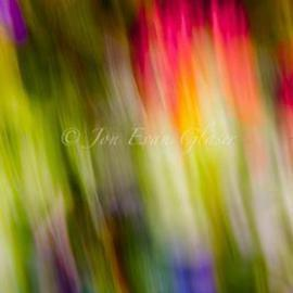 Jon Glaser: 'Abstraction of Butterflies', 2011 Color Photograph, Abstract. Artist Description: This image is mounted on plexiglass and is limited to only 3 Artist Proof...