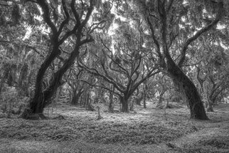 Jon Glaser Artwork Enveloping Timber, 2015 Black and White Photograph, Landscape