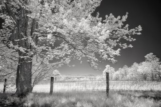 Jon Glaser: 'Leaves of Spring', 2016 Infrared Photograph, Rural. Artist Description:  This photograph was taken in Cades Cove located in the Smoky Mountains. It borders Tennessee and North Carolina and are part of the Appalachian Mountains. The fog that hangs of the region is caused by the trees and plants that give off orgainic compounds with a high vapor ...