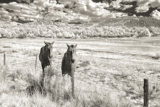 Jon Glaser Artwork My Two Friends, 2014 Black and White Photograph, Landscape