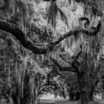 Spanish Moss In Georgia Ii, Jon Glaser