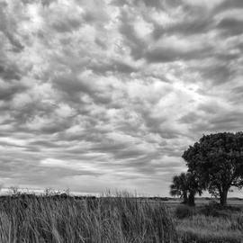 Jon Glaser Artwork The Right Tree, 2012 Black and White Photograph, Landscape