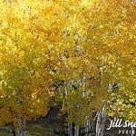 leaves of gold By Jill Sneidman