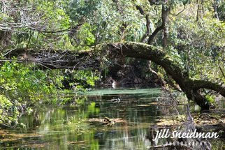 Jill Sneidman: 'rainbow springs', 2017 Color Photograph, Landscape. Artist Description: Rainbow Springs State ParkDunnellon, FL...