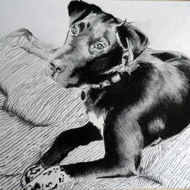 Jeremy Steeves Artwork Mans Best Friend, 2013 Charcoal Drawing, Animals