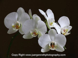Juergen Roth Artwork Orchids, 2010 Color Photograph, Floral