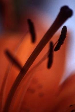 Artist: Katja Liedle - Title: Lily - Medium: Color Photograph - Year: 2000