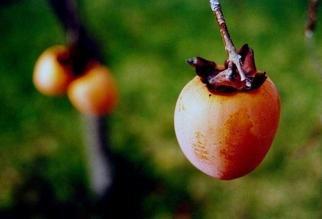 Artist: Karen Tenni - Title: three fruit - Medium: Color Photograph - Year: 2004