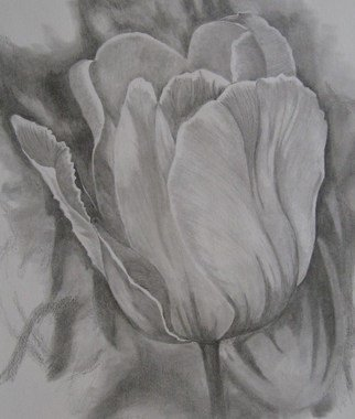 Ken Hovren Artwork Tulip, 2008 Tulip, Floral