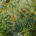 Malabar Trogons in the forest By Meenakshi Subramaniam