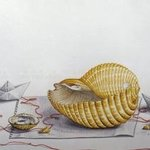My Agean sea shell By Thomai Kontou