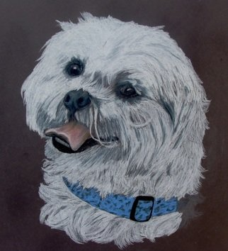Diane Kopczeski: 'Andy', 2012 Pencil Drawing, Animals.              Colored pencil drawing, done from your photo.             ...
