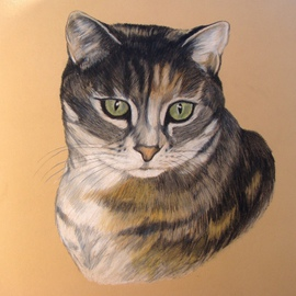Diane Kopczeski: 'Buttons', 2009 Pencil Drawing, Cats. Artist Description:  Colored pencil drawing, done from your photo. ...