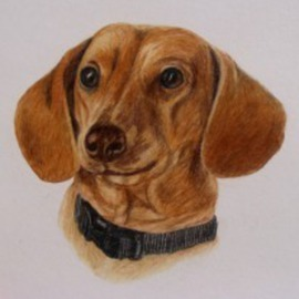 Diane Kopczeski Artwork Fritz, 2010 Pencil Drawing, Dogs