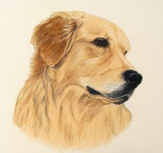 Diane Kopczeski Artwork Isaac, 2011 Pencil Drawing, Dogs