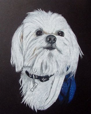 Diane Kopczeski Artwork Mikey, 2010 Pencil Drawing, Dogs