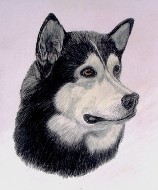 Diane Kopczeski: 'Murray', 2012 Pencil Drawing, Dogs.                Colored pencil drawing, done from your photo.               ...