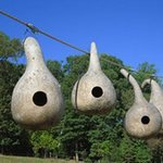 Bird House Gourds, K Baker