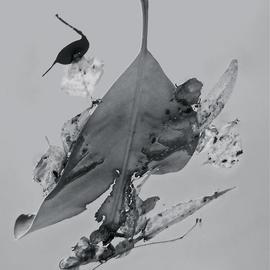 Luise Andersen: 'Abstract in Nature ENCHANTMENT AFLOAAT III', 2013 Black and White Photograph, Abstract. Artist Description:     Creatively engaged with this originally color photograph of floating' enchantments' . . the' torn' heart engaged' me. . .' . . . and worked on debris. . colors . . converted into black and white. . adjusted, until it was for my' eyes' perfect. . . is a four view image. . . each has other figures etc. . yet is from SAME. .. . is ...