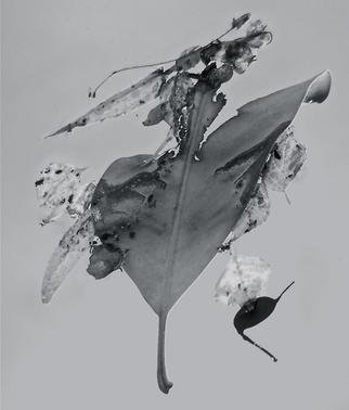Luise Andersen: 'Abstract in Nature ENCHANTMENT AFLOAT II', 2013 Black and White Photograph, Abstract.    Creatively engaged with this originally color photograph of floating' enchantments' . . the' torn' heart engaged' me. . .' . . . and worked on debris. . colors . . converted into black and white. . adjusted, until it was for my' eyes' perfect. . . is a four view image. . . each has other figures etc. . yet is from SAME. .. . is a poem...