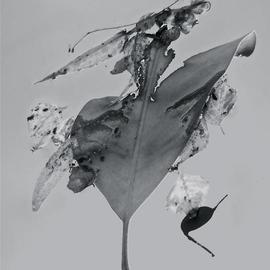 Luise Andersen: 'Abstract in Nature ENCHANTMENT AFLOAT II', 2013 Black and White Photograph, Abstract. Artist Description:    Creatively engaged with this originally color photograph of floating' enchantments' . . the' torn' heart engaged' me. . .' . . . and worked on debris. . colors . . converted into black and white. . adjusted, until it was for my' eyes' perfect. . . is a four view image. . . each has other figures etc. . yet is from SAME. .. . is ...