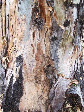 Luise Andersen Artwork BARK OF EUCALYPTUS TREE IV, 2011 Color Photograph, Trees