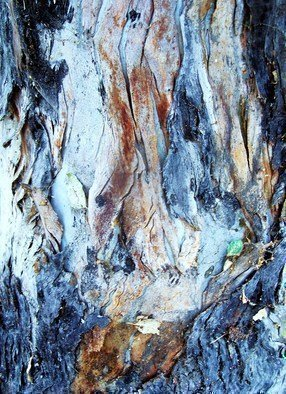 Luise Andersen Artwork BARK OF EUCALYPTUS TREE XIV, 2011 Color Photograph, Trees