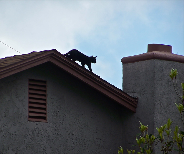 Luise andersen artwork cat on the roof top i original for 3999 roof