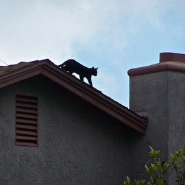 Luise Andersen: 'CAT ON THE ROOF TOP I', 2012 Color Photograph, Birds. Artist Description:   . . couple of days ago. . again. . while roaming around the park taking photo shoot of Palm trees . . and Eucalyptus trees. . people. . dogs. . heard this 'miauing' . . eyes followed sound. . and saw two grown younger cats on doorstep. . wanting to be let in. . rain was in the forecast. . and skies had ...