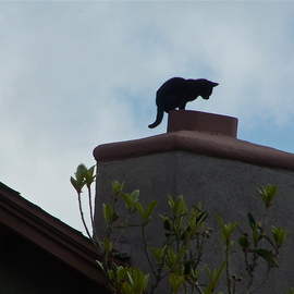 Luise Andersen: 'CAT ON THE ROOF TOP II Chimney I', 2012 Color Photograph, Birds. Artist Description:    . . couple of days ago. . again. . while roaming around the park taking photo shoot of Palm trees . . and Eucalyptus trees. . people. . dogs. . heard this 'miauing' . . eyes followed sound. . and saw two grown younger cats on doorstep. . wanting to be let in. . rain was in the forecast. . and skies had ...