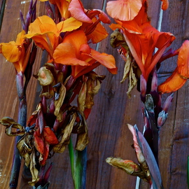 Luise Andersen Artwork Canna Lily CLSun II, 2012 Color Photograph, Floral