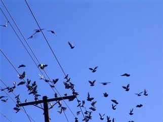 Color Photograph by Luise Andersen titled: DOVES IN FLIGHT II  Settling down, 2008
