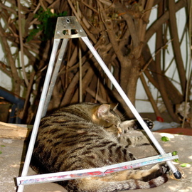 Luise Andersen: 'EASELTIGER', 2007 Color Photograph, Cats. Artist Description:  Sizzles today. . .  just wanted to check my' jungle' in backyard. .  and looked to the right. . and there' Tiger' . . ? ? . . Tiger? ? ! !  What? ! this tall cat was fast asleep in between the small table easel. . on top of the old door. . that is on top of the cooler ( hardly ever gets ...