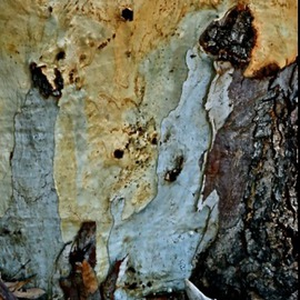 Luise Andersen Artwork EUCALYPT The Beauty And Spell I, 2013 Color Photograph, Trees