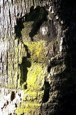 Luise Andersen Artwork EXIT I Tree Trunk Series, 2011 Color Photograph, Other