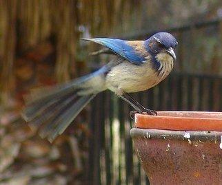 Luise Andersen Artwork FEATHERS   III, 2008 FEATHERS   III, Birds