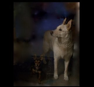 Luise Andersen: 'FLOPSY AND PRECIOUS Behind Glass Door I', 2012 Color Photograph, Dogs.  . . both are behind glass door, outside in the back yard at residence of my dear, longtime friend, Gerda. . . . . .' Flopsy' is the large beautiful Dog. . and Precious the beautiful small one. . have' baby sat' Flopsy  a year ago or so for several days. . she is a great, smart, loving  Dog. . . Precious...