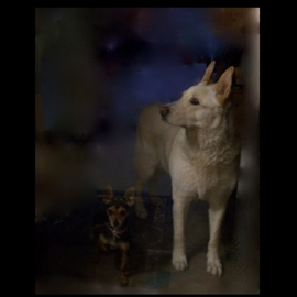 Luise Andersen Artwork FLOPSY AND PRECIOUS Behind Glass Door I, 2012 Color Photograph, Dogs