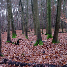 GERMANY   TREBUR   First  Stroll Through Forest
