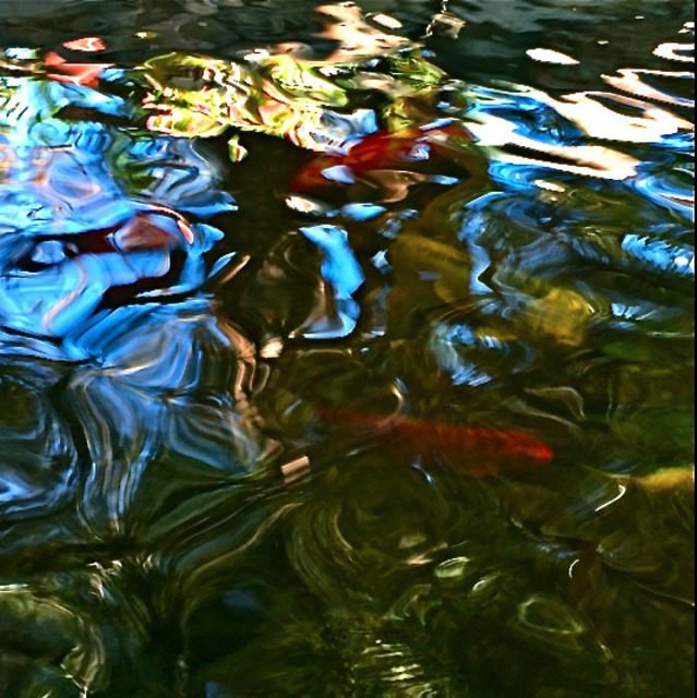Luise Andersen: Goldfish Pond VII , 2015 Color Photograph