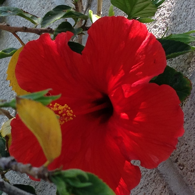 Luise Andersen  'HIBISCUS Are In Full Bloom RDII', created in 2014, Original Fiber.