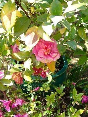 Luise Andersen Artwork HUES OF SPRING IV  Radcliffe Garden, 2008 HUES OF SPRING IV  Radcliffe Garden, Floral