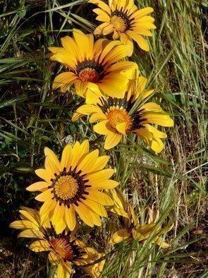 Luise Andersen Artwork HUES OF SPRING  VIII   Radcliffe Garden, 2008 HUES OF SPRING  VIII   Radcliffe Garden, Floral