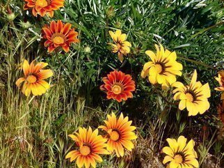 Luise Andersen Artwork HUES OF SPRING  VII   Radcliffe Garden, 2008 HUES OF SPRING  VII   Radcliffe Garden, Floral