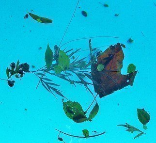 Luise Andersen Artwork IMAGE IN THE POOL LeafAtPlay I, 2010 Color Photograph, Nature